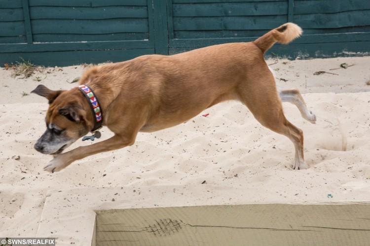 Boo long jump