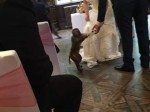 Groom surprises bride when he hires a monkey as the bearer at their wedding