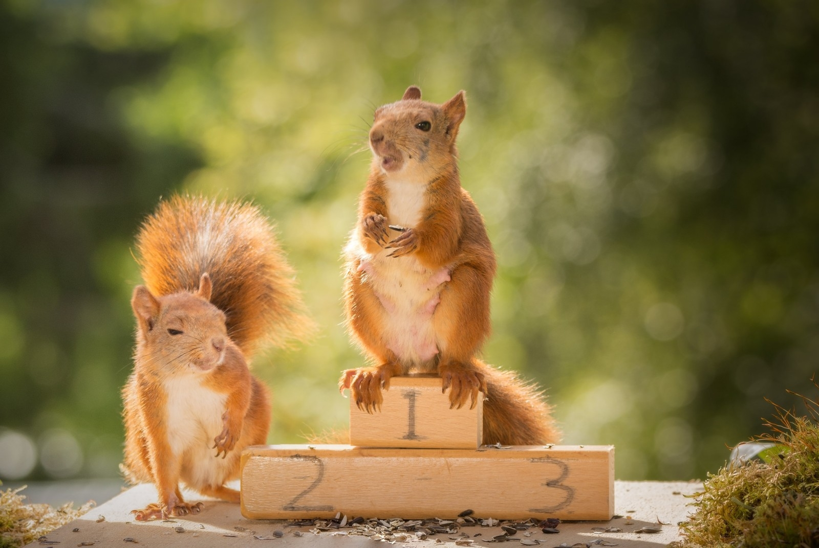 Photographer captures squirrels doing Olympic games
