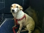 Firecrews rescue Jack Russell stuck in drainpipe