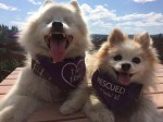 Blind pup follows his four-legged best friend around every day on a lead