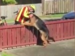 Man captures the adorable moment the postman stops to hug his dog every day