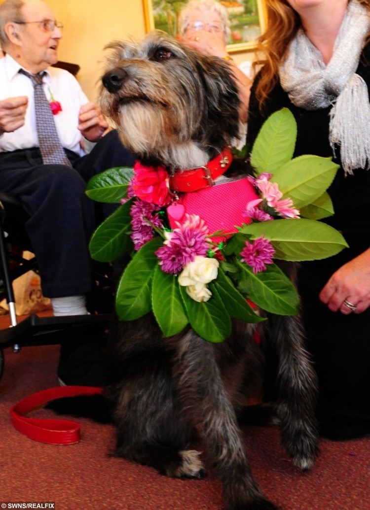 Christine and Stan Earl, in their nineties, renewing their wedding vows with their neighbour's dog Suki as a bridesmaid