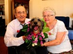 Suki the dog is given bridesmaid role at owner's wedding blessing