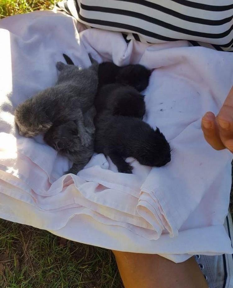 swns_kittens_found_10