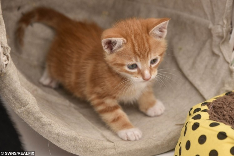swns_kittens_rescued_06