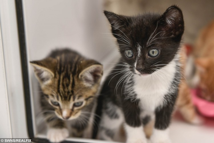 swns_kittens_rescued_10