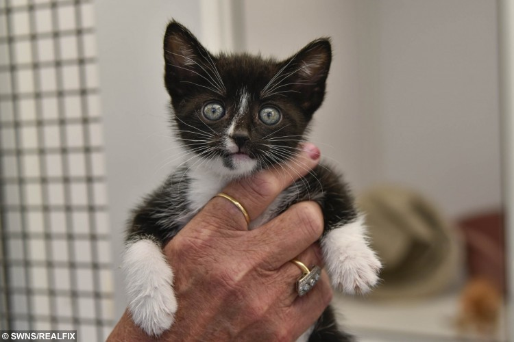 These kittens, yet to be named, were found in a closed bin bag