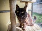Britain's oldest cat finally gets the retirement he deserves after being abandoned