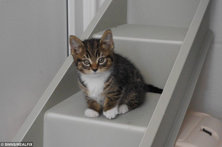 Stig the cat needs your help