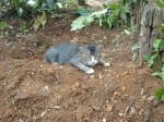 Heartbroken cat lives by owners grave for a year and refuses to leave