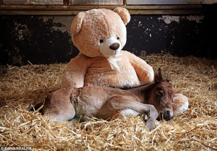 swns_orphaned_foal_05