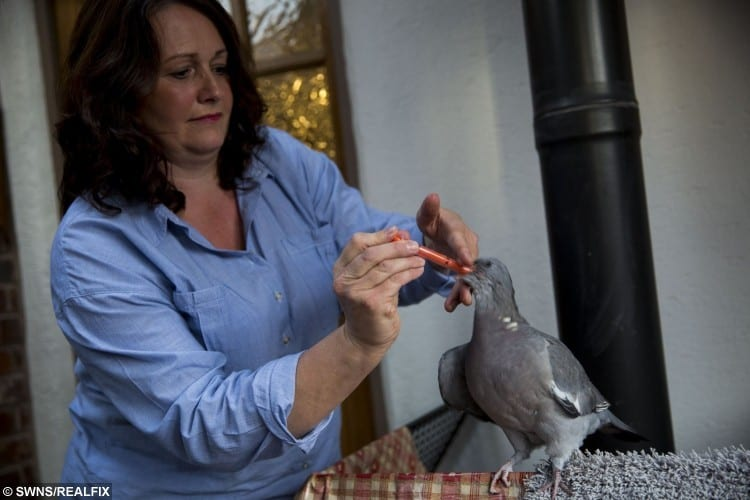 swns_pet_pigeon_20