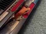Couple shocked after finding bright orange snake hiding in the vacuum