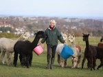 A Self-Made Millionaire And Cancer Survivor Claims That She Owes Everything To Her ALPACAS