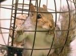 Hungry Squirrel Found Itself Trapped In A Bird Feeder