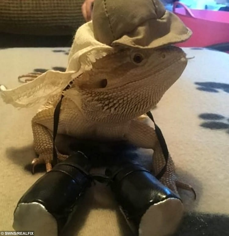 Meet the one-year-old who is taking the Instagram world by storm - a BEARDED DRAGON named Wallace.