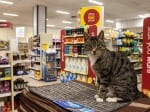 Cat Who Moved Into Wilko Store Now Has His Own Facebook Page After Becoming So Popular
