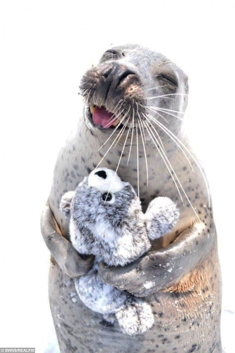 SWNS_TOY_SEAL_05