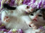 CuteKittenWith Wobbly Legs Needs Loving Home So Charity Gives Cat Epic Name To Match