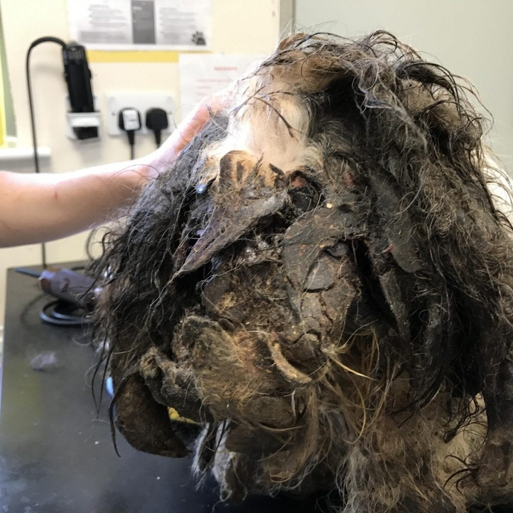 Abandoned Dog Whose Fur Was So Matted His Leg Became Stuck