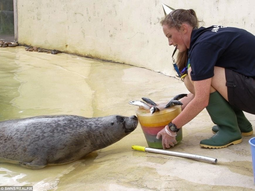 Europe s oldest common seal called babyface celebrates for Are fish considered animals