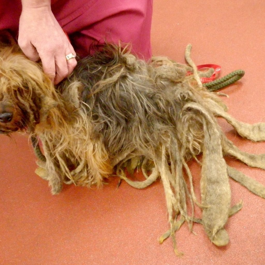 Cruel Pet Owner Banned From Keeping Animals After Leaving