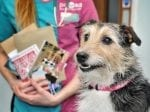 Jack Russell Saved From Sticky Situation After Munching On Glossy Leaflet That Glued His Teeth Together