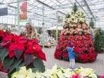 Festive Flowers Used To Create Beautiful Christmas Tree
