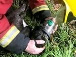 Heartwarming Pictures Of Firefighters Saving Dog With Oxygen Mask After House Blaze