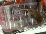 Mum Horrified To Find Live Rat Trapped In Sealed Packed Of Plumbs