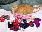 Real Life Cat Burglar! Cheeky Pet Leaves Owner Red-Faced After Stealing Knickers And Stockings