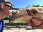Baby Camel Torn From Mother And Drugged At A Petting Zoo – Rescued By Caring Attorney