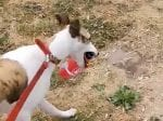 Eco-Friendly Whippet Becomes Latest Addition To UK's War On Plastic