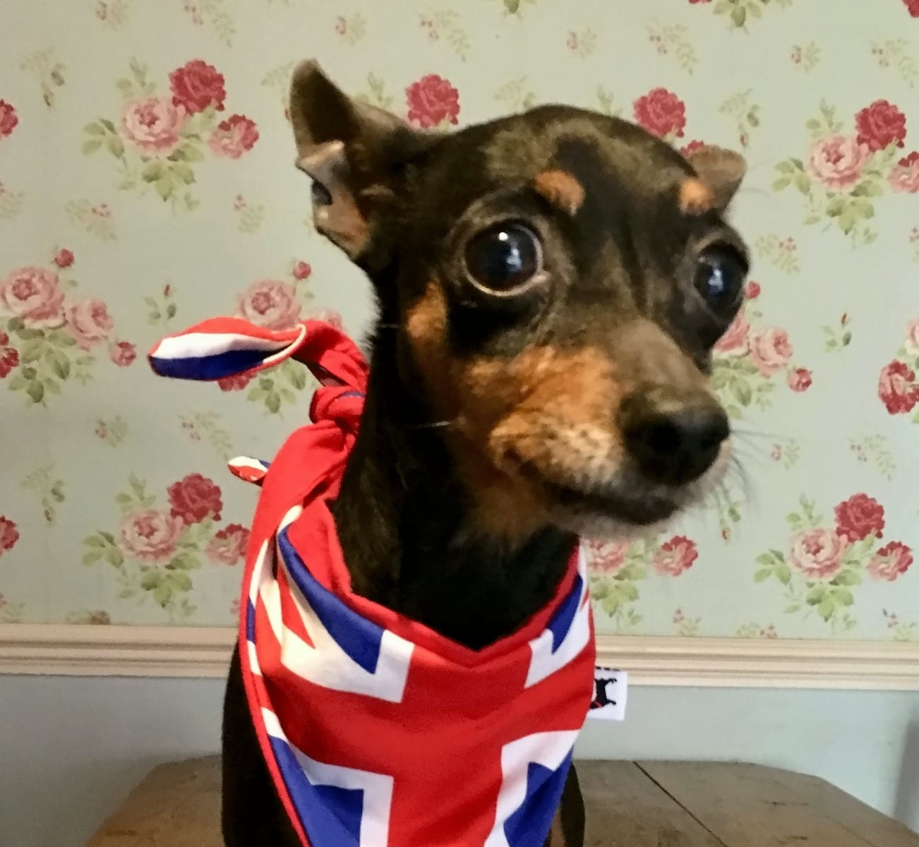 Huge £11,000 Reward Offered For Safe Return Of Beloved Pet Dog – 'Stolen' From Home As Owners Watched TV