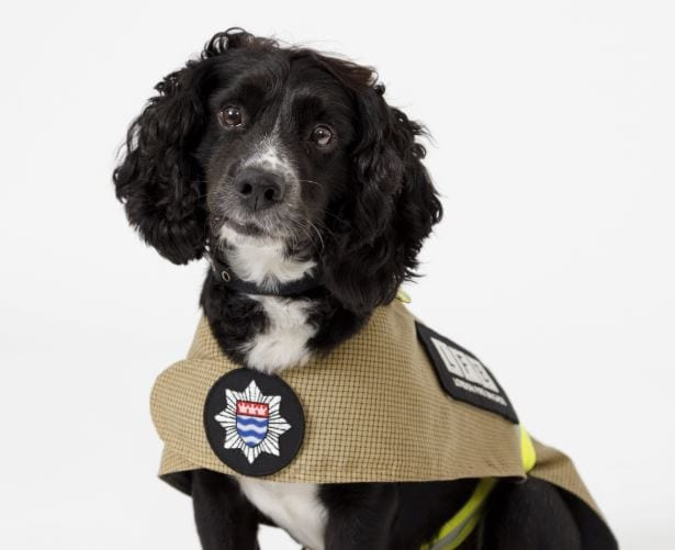 New Uniform For London Firefighters – And Their DOGS