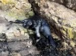 One-Month-Old Seal Pup Rescued After Being Discovered Sunbathing On Rock Where It Had Washed Up