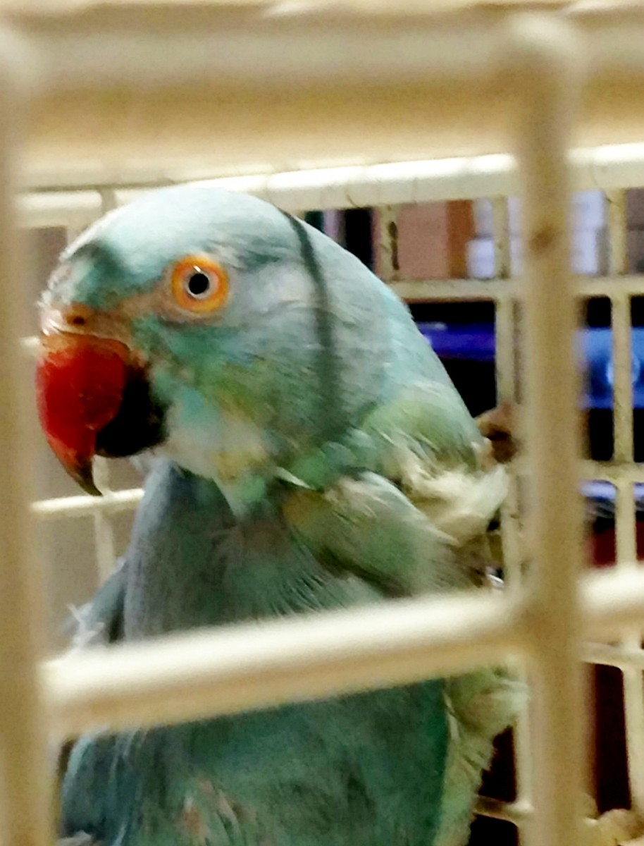 Cruel Thug Shoves Parakeet Through Charity Shop Letterbox