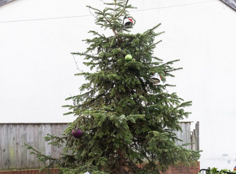 FIR REAL? - Sad Looking Christmas Tree Has Been Branded Britain's Worst By Disappointed Residents