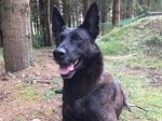 Police Dog Demonstrates The Ultimate Test Of Obedience By Balancing A SAUSAGE On His Nose