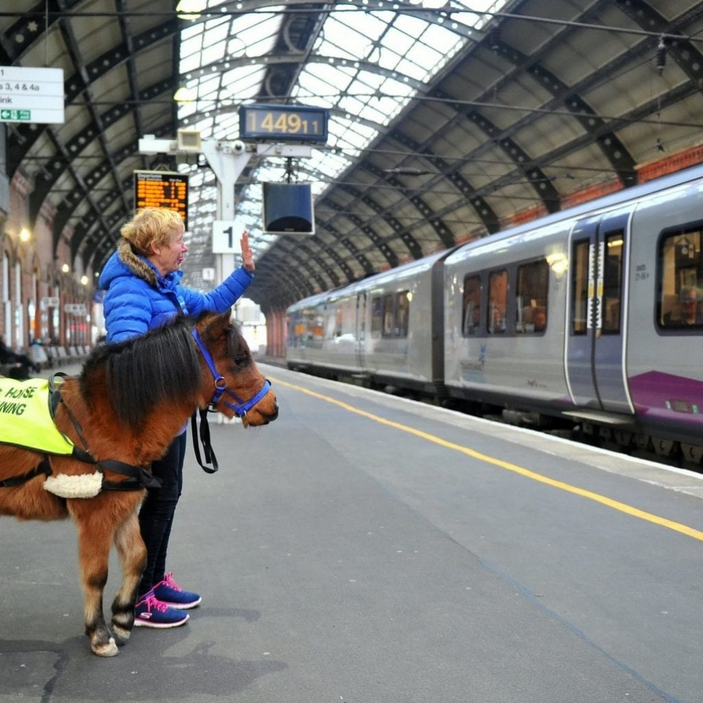 These Pictures Show Britain's First 'Guide Horse In Training' Getting Used To Train Stations