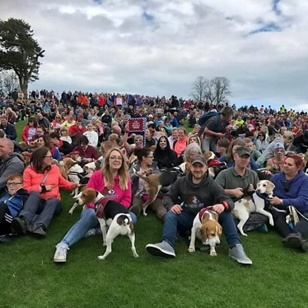 Beagle Owner Wins Guiness World Record For Organising Largest Single-Breed Dog Walk - Involving Over 1,000 Beagles