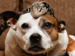Rescue Dog Saved From The Brink Of Death Strikes Up Unlikely Friendship With A Lizard