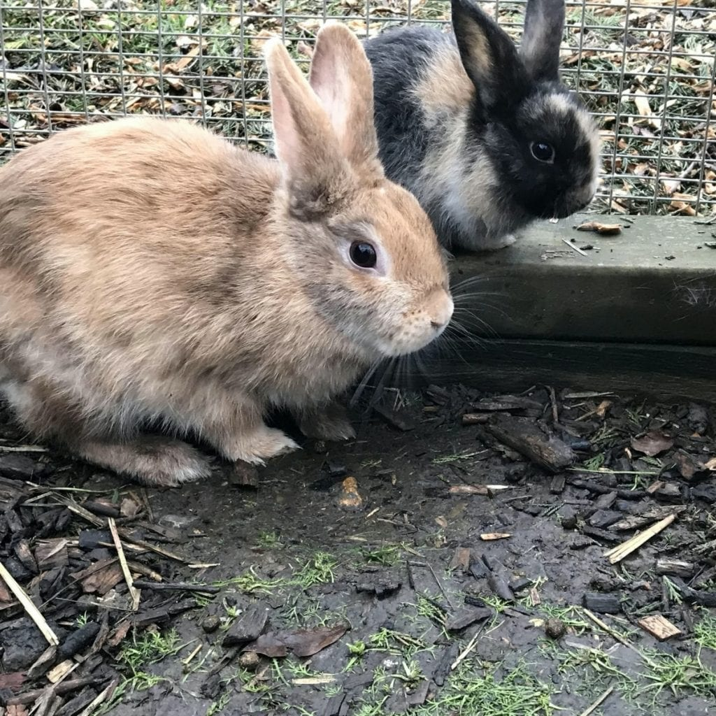 Cardboard Box Was Found Dumped By The Side Of A Busy Road Filled With Bunny Rabbits