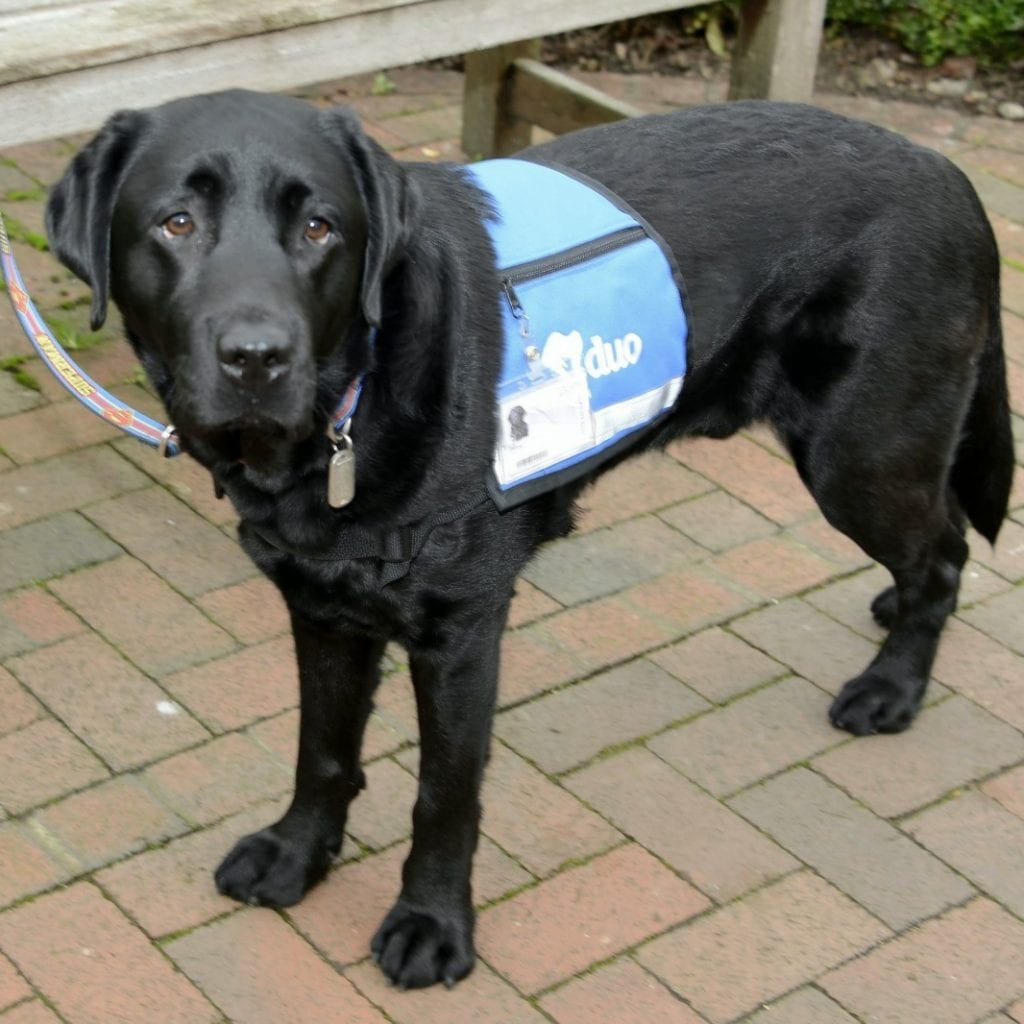 Kent Police Have Become The First In The Country To Have A Therapy Dog To Soothe Victims During Traumatic Interviews