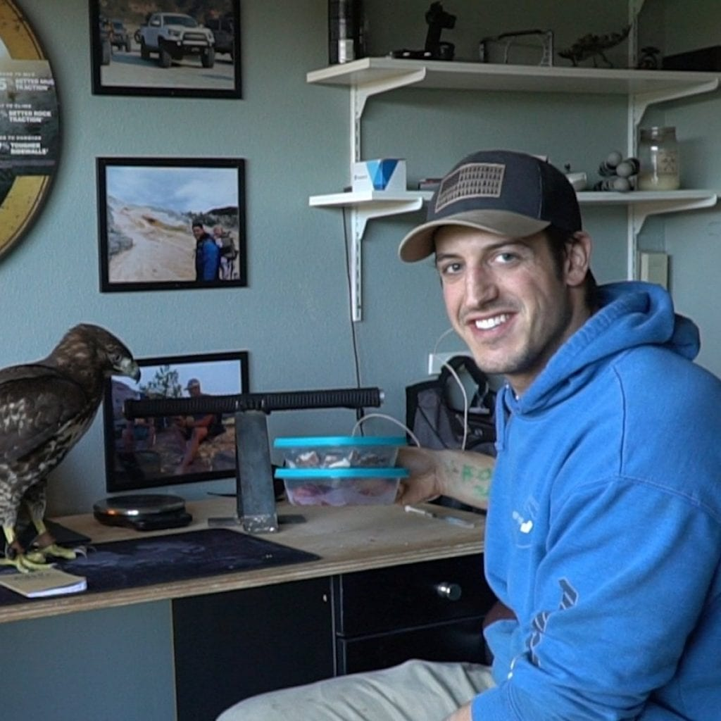 Man Cares For Wild Hawk Named Carol – That Flies Around His Family Home