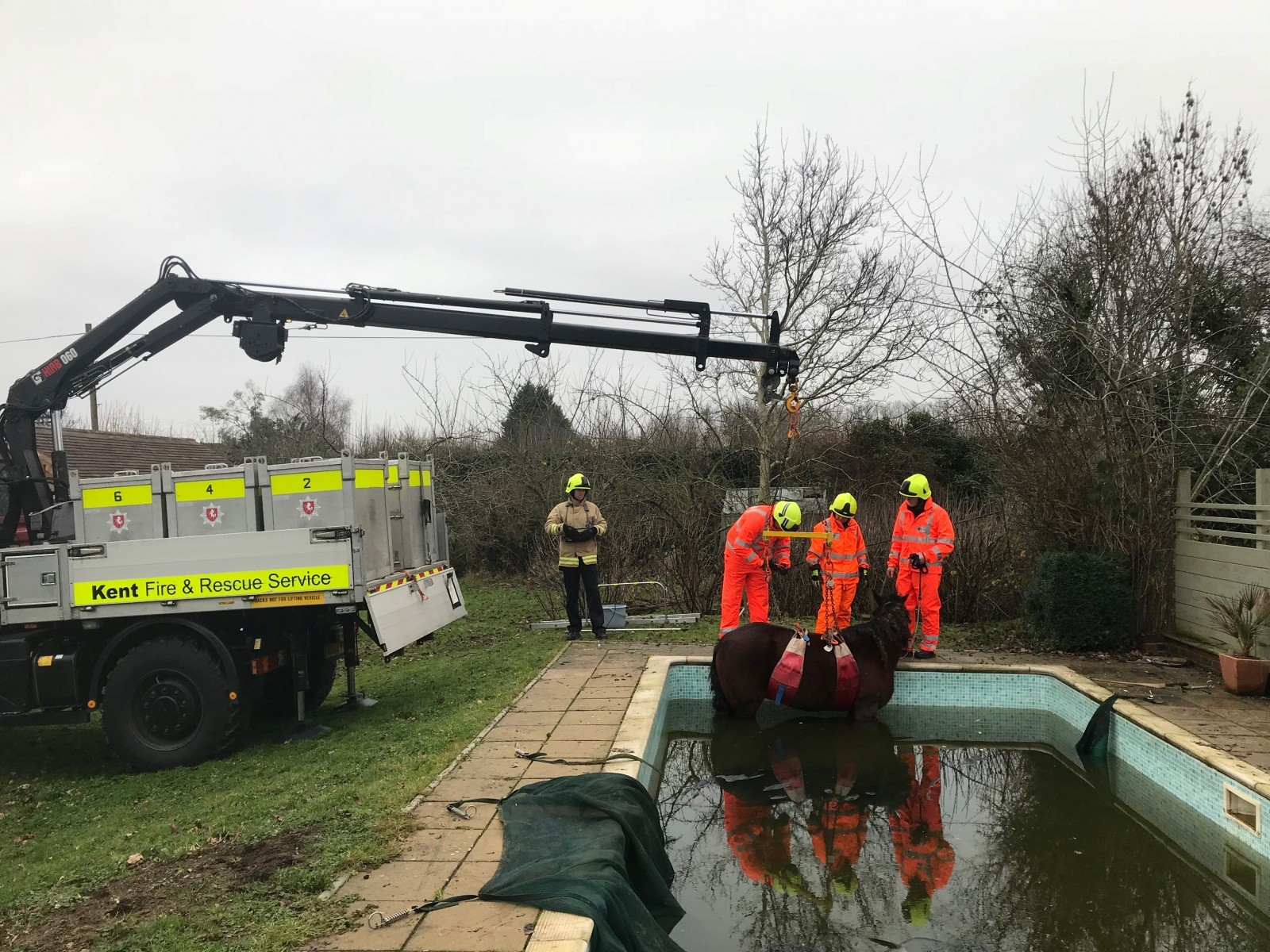 Horse Had To Be Winched Out Of A Swimming Pool After Wandering In On New Year's Eve