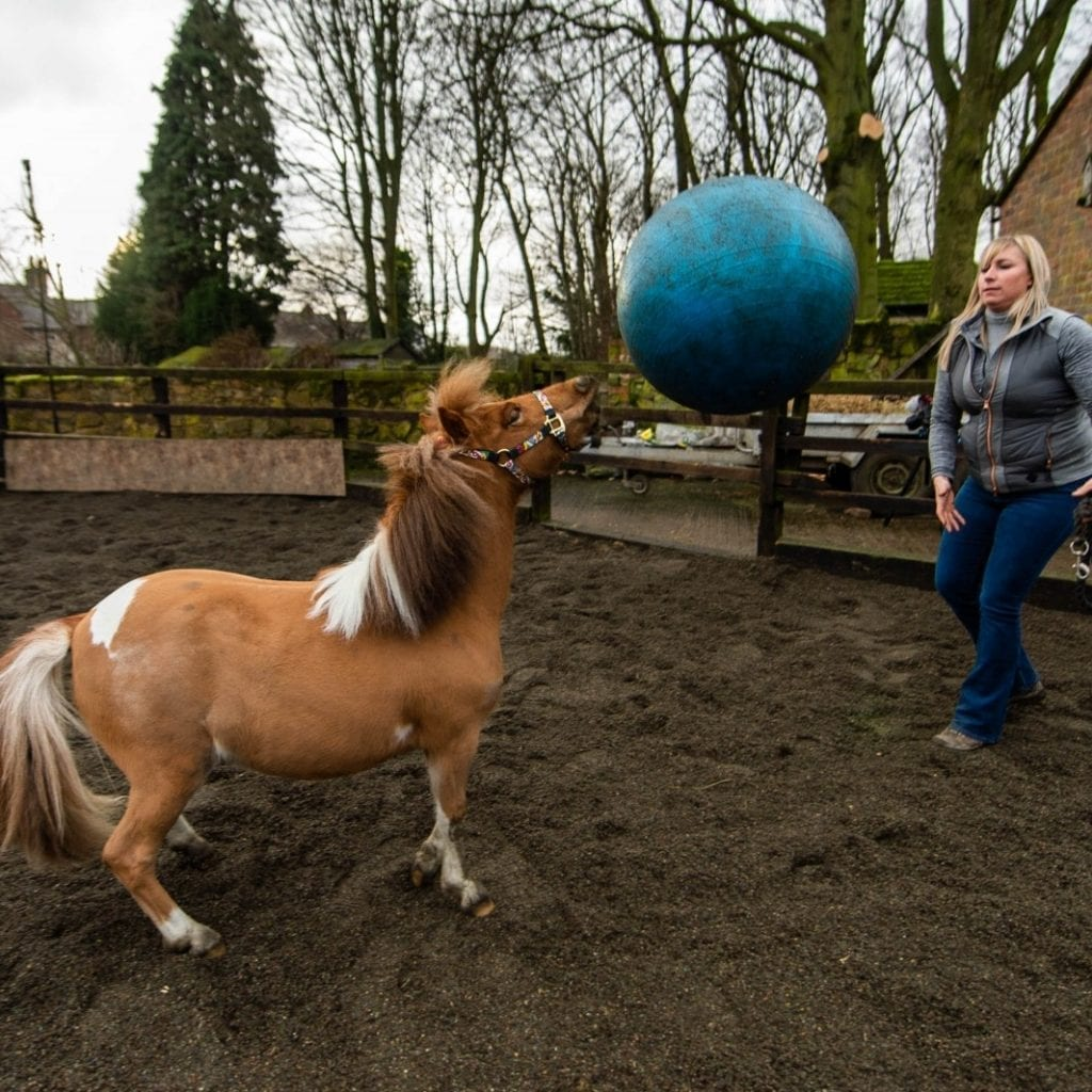 Pony Owner Has Offered Her Colt's Services To His Favourite Club - After He Became Obsessed With Playing FOOTBALL