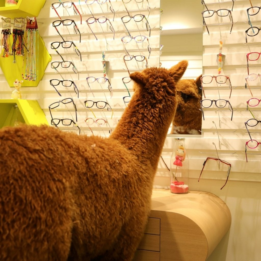 Hilarious Moment An Escaped Alpaca Was Spotted Wandering Around An OPTICIANS