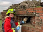 Horse With A Nose For Trouble Found Itself Stuck In World War Two Pillbox